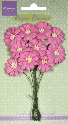 MD: 10 x Daisies bright pink