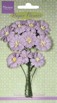 MD: 10 x Daisies light lavender
