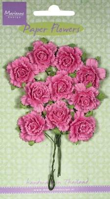 MD: 10 x Carnations bright pink