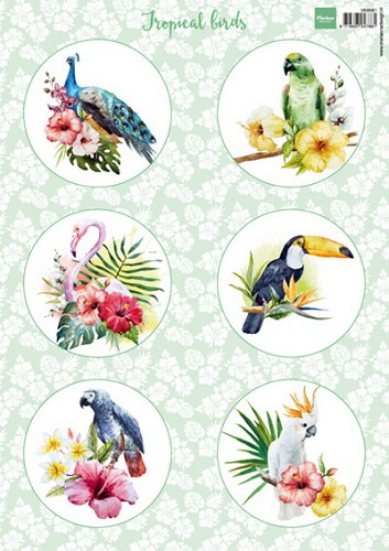 MD: Knipvel Tropical Birds