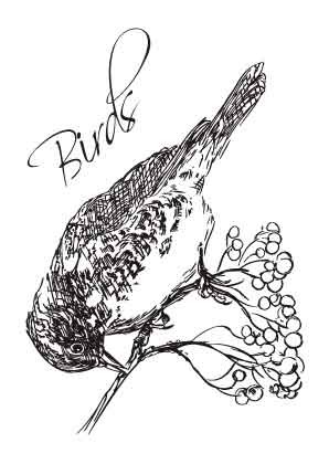 SL: Clear Stamp; Birds