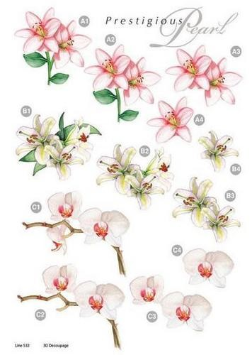 Craft UK: stansvel - Die Cut; Prestigious Pearl, Orchidee