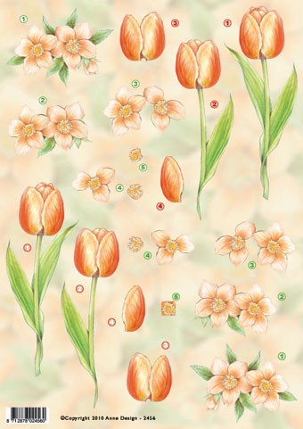 Anne Design - Tulpen